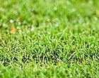 Foto: Anderlecht et le Standard parmi les pires pelouses de Pro League
